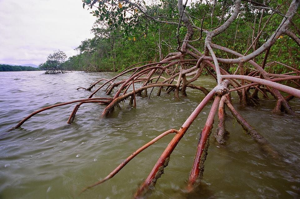 Foto de manguezal (ICMBio)